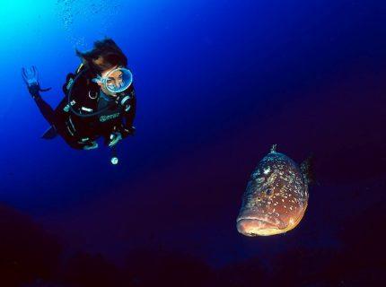 Mérou brun (Epinephelus marginatus) et plongeuse (Toutes zones)