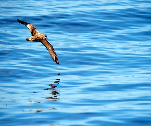 Réserve-Bonifacio-marin-espèce-nature-Corse.jpg