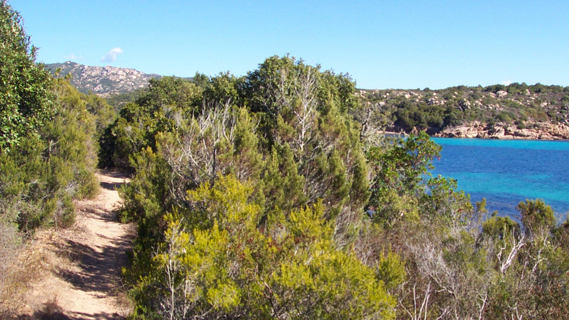 Sentier-Testa-balade-Bonifacio-Corse.jpg