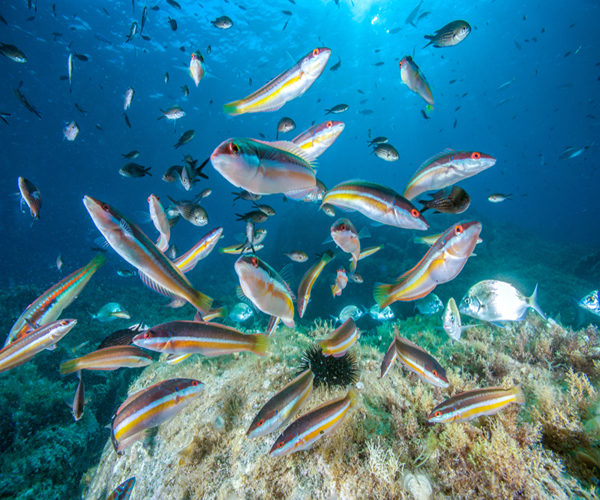 aquarium-geant-poissons-mer-bonifacio