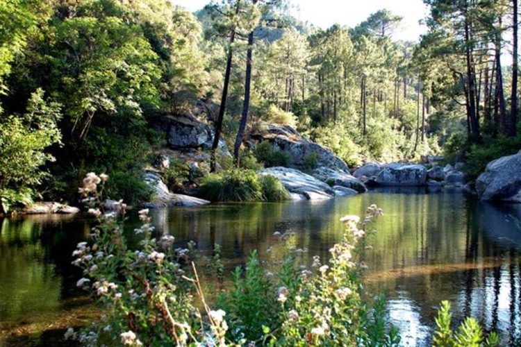Top25-riviere-loso-nature-sauvage-Corse